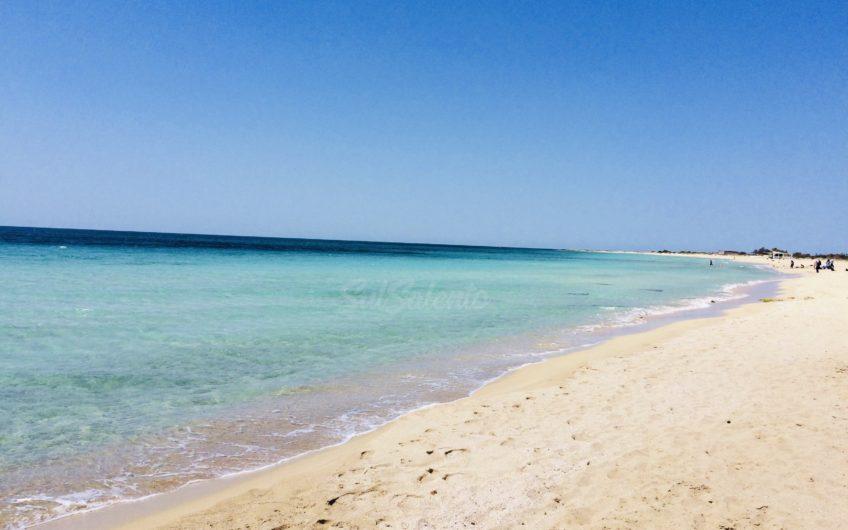 Bilocale MIMOSA da 2 a 4 posti a 300 metri sabbia